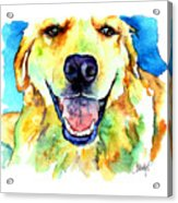 Golden Retriever Portrait Acrylic Print