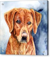 Golden Retriever Sara Acrylic Print