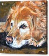 Golden Retriever Senior Acrylic Print by Lee Ann Shepard