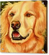 Golden Retriever Sweet As Sugar Acrylic Print by Susan A Becker