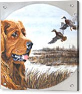 Golden Retriever With Marsh Scene Acrylic Print