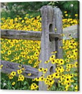 Golden-rod  Crowd Out Acrylic Print
