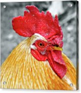 Golden Rooster Portrait Acrylic Print