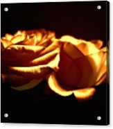 Golden Roses 5 Acrylic Print