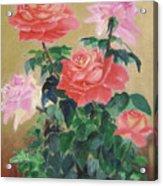 Golden Roses Acrylic Print