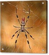 Golden Silk Spider 3 Acrylic Print
