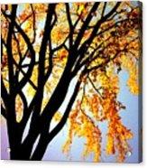 Golden Sillhouette Acrylic Print