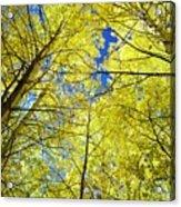 Golden Sky Acrylic Print