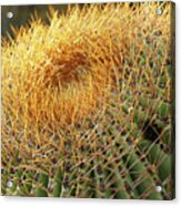 Golden Spines Acrylic Print