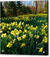 Golden Spring Carpet Acrylic Print