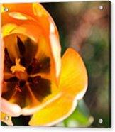 Golden Spring Acrylic Print