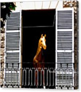 Golden Stallian Acrylic Print