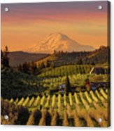 Golden Sunset Over Hood River Pear Orchard Acrylic Print