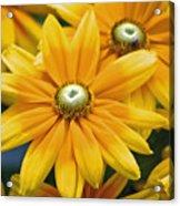 Golden Sunshine Acrylic Print