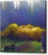 Golden Surprise Acrylic Print