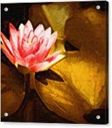 Golden Swamp Flower Acrylic Print