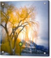Golden Time Acrylic Print