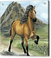 Golden Tolt Icelandic Horse Acrylic Print