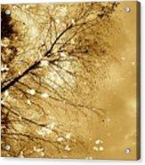 Golden Tones Acrylic Print