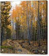 Golden Trail Acrylic Print by Barbara Schultheis
