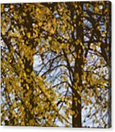 Golden Tree 2 Acrylic Print