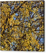 Golden Tree 3 Acrylic Print