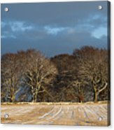 Golden Trees Acrylic Print