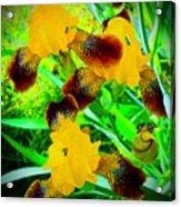 Golden Trio Of Iris Acrylic Print