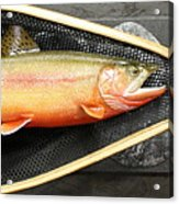 Golden Trout River Slice Acrylic Print by Eric Knowlton