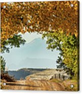 Golden Tunnel Of Love Acrylic Print