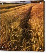 Golden Waves Of Grain Acrylic Print