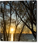 Golden Willow Sunrise - Greeting A Bright Day On The Lake Acrylic Print