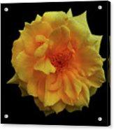Golden Wonder Acrylic Print