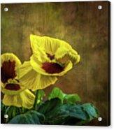 Golden Yellow Pensamientos Acrylic Print