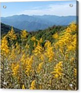 Goldenrod Mountain View Acrylic Print