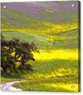 Goldenrod Oak Santa Ynez California 2 Acrylic Print
