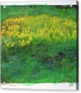 Goldenrods In Field Acrylic Print