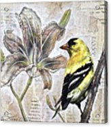 Goldfinch And Lily Acrylic Print