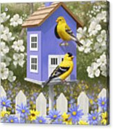 Goldfinch Garden Home Acrylic Print by Crista Forest
