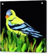 Goldfinch In The Garden Acrylic Print