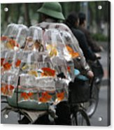 Goldfish In A Bag Vietnam On Bicycle Unique  Acrylic Print