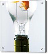 Goldfish In Light Bulb  Acrylic Print