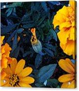 Goldies Acrylic Print