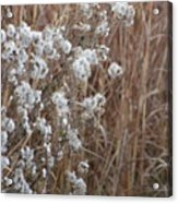 Golds And Whites Acrylic Print