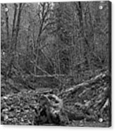 Goldstream Provincial Park Black And White Acrylic Print
