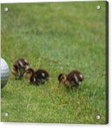 Golf Anyone Acrylic Print
