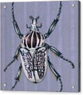 Goliath Beetle Acrylic Print
