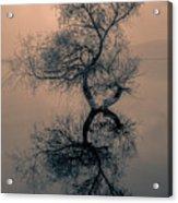 Golyazi Acrylic Print