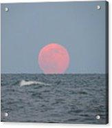 Good Moon Rising  Acrylic Print