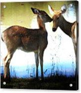 Good Mornin Kiss Acrylic Print